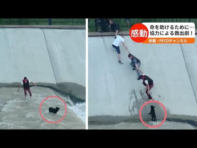 【小さな命を守る】水路に落ちた犬。発見した人たちが「人間の鎖」を作って救出…!