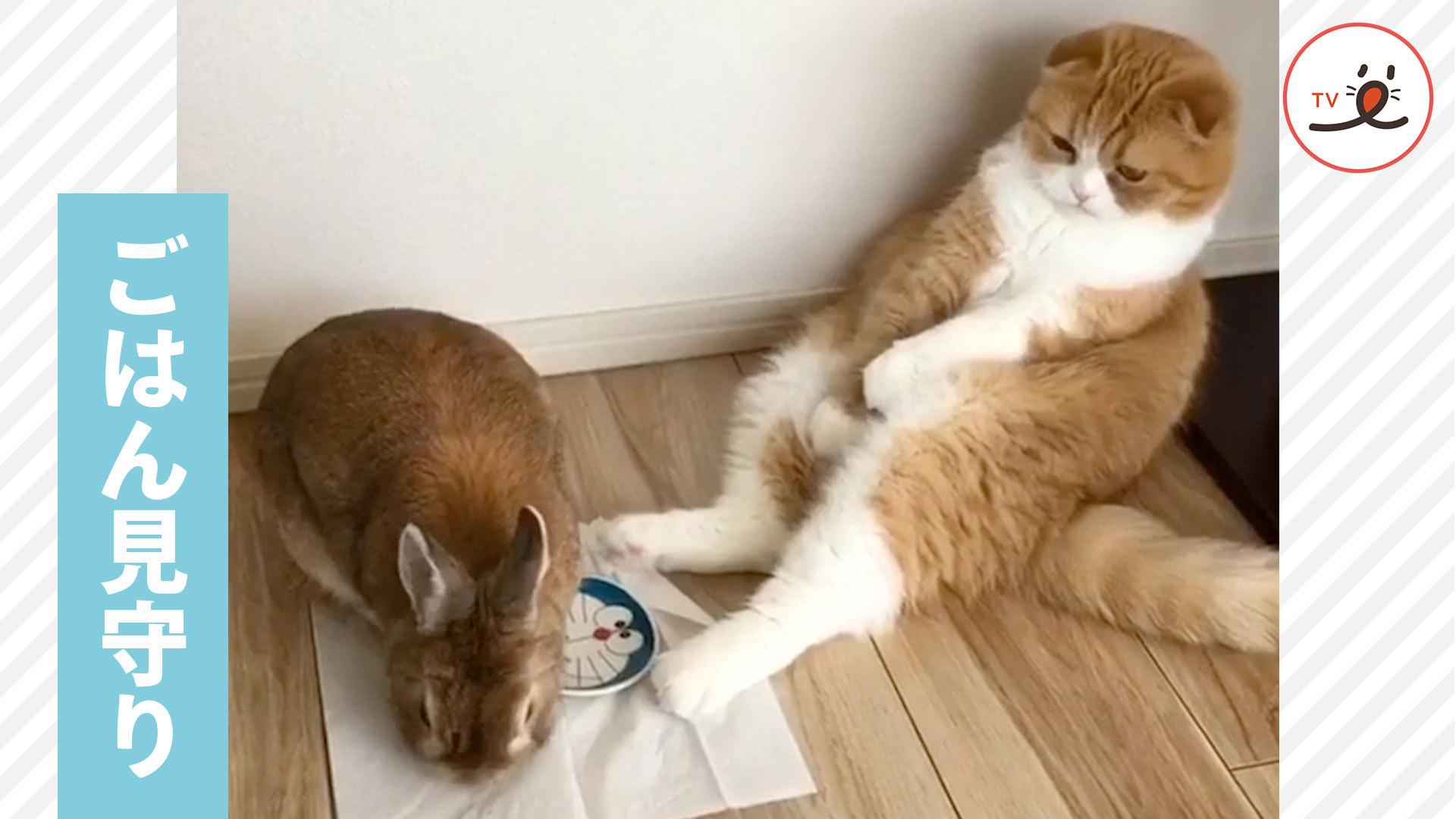 😺「ちゃんと食べてるか〜?」 うさぎさんの食事を見守るニャンコだけど…👀