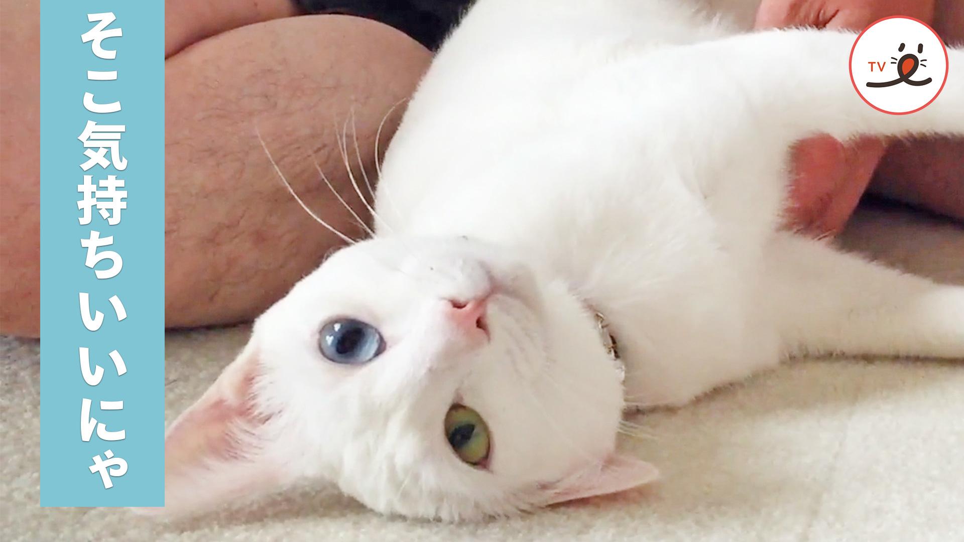 お尻のマッサージが大好きな猫ちゃん😽 全身で気持ちよさを表現💕