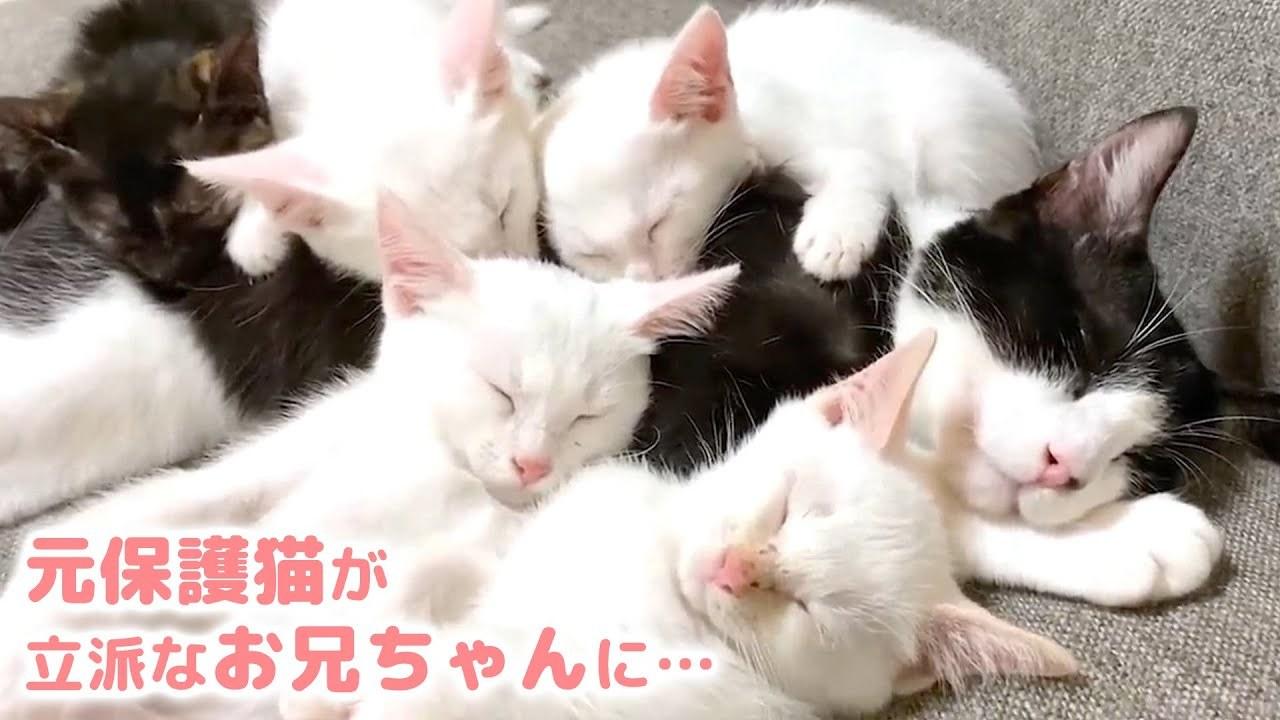 あの日保護された子猫が! 立派なニャンコになって愛情を与える側に…♡
