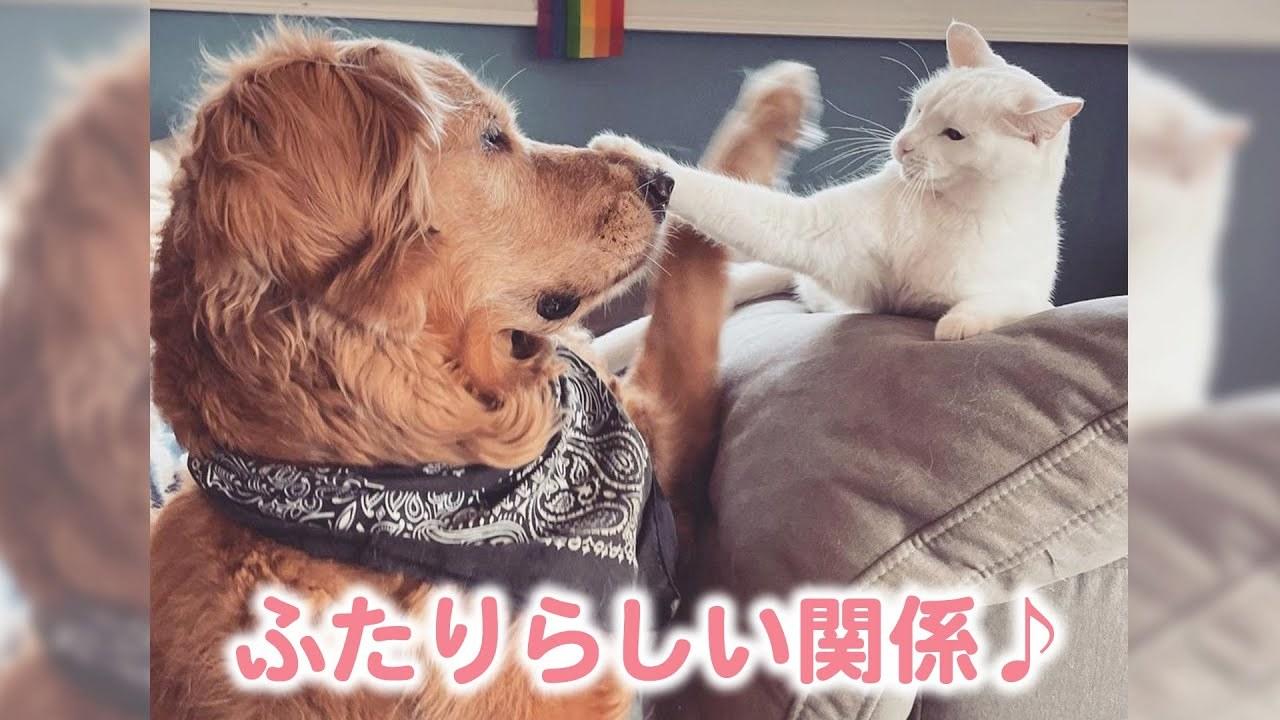 【これが彼らのコミュニケーション♪】いつもレスリングごっこを繰り広げる仲良し犬猫兄弟🐕🐈