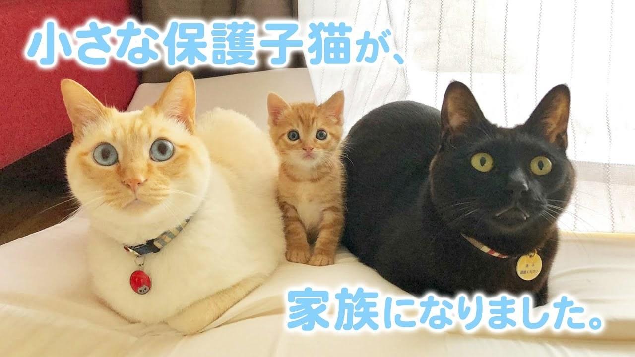 """家族が増えました! 小さな保護子猫を見守る2匹のお兄ちゃんの """"優しさ""""にほっこり♡"""