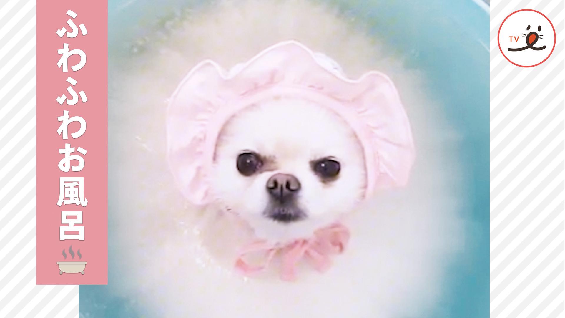 お風呂でネムネム🛁 うっとり気持ち良さそうなワンちゃん🐶✨