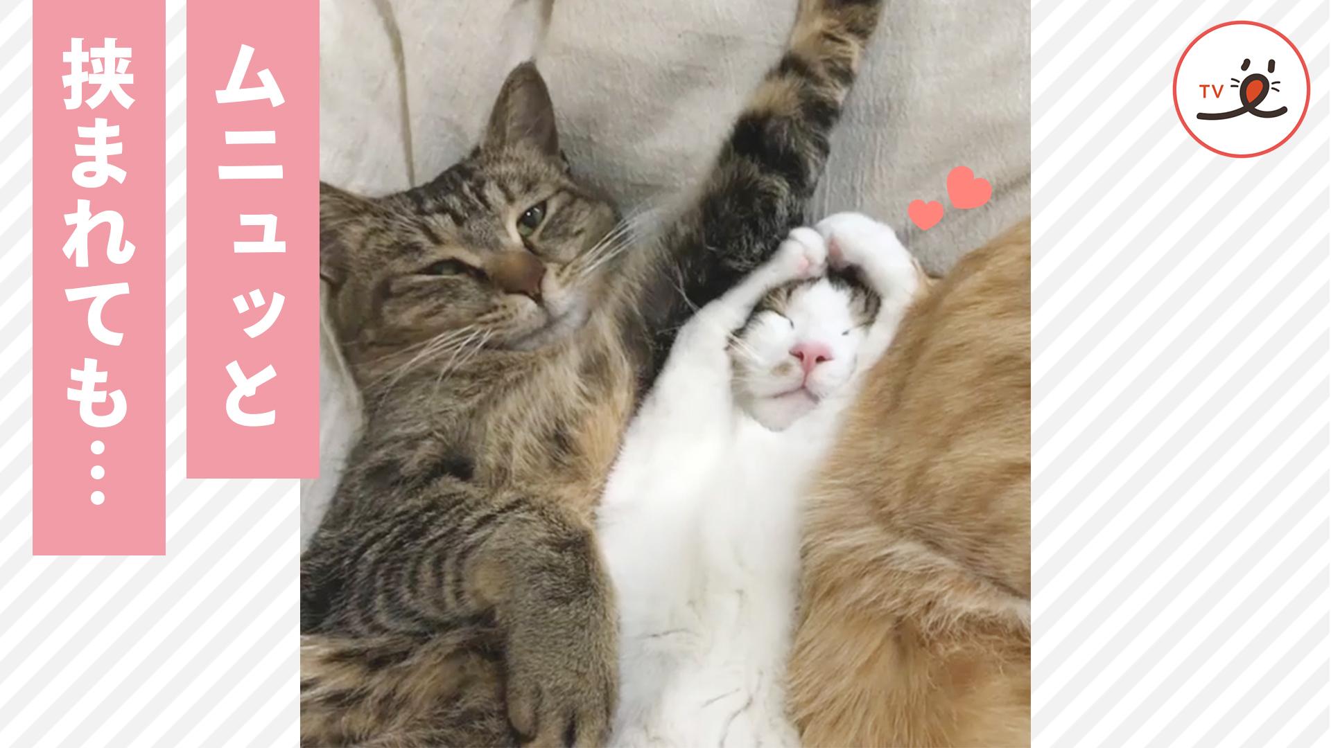 不思議なポーズでおやすみ…♡ 挟まれてもスヤスヤな子猫ちゃん😴