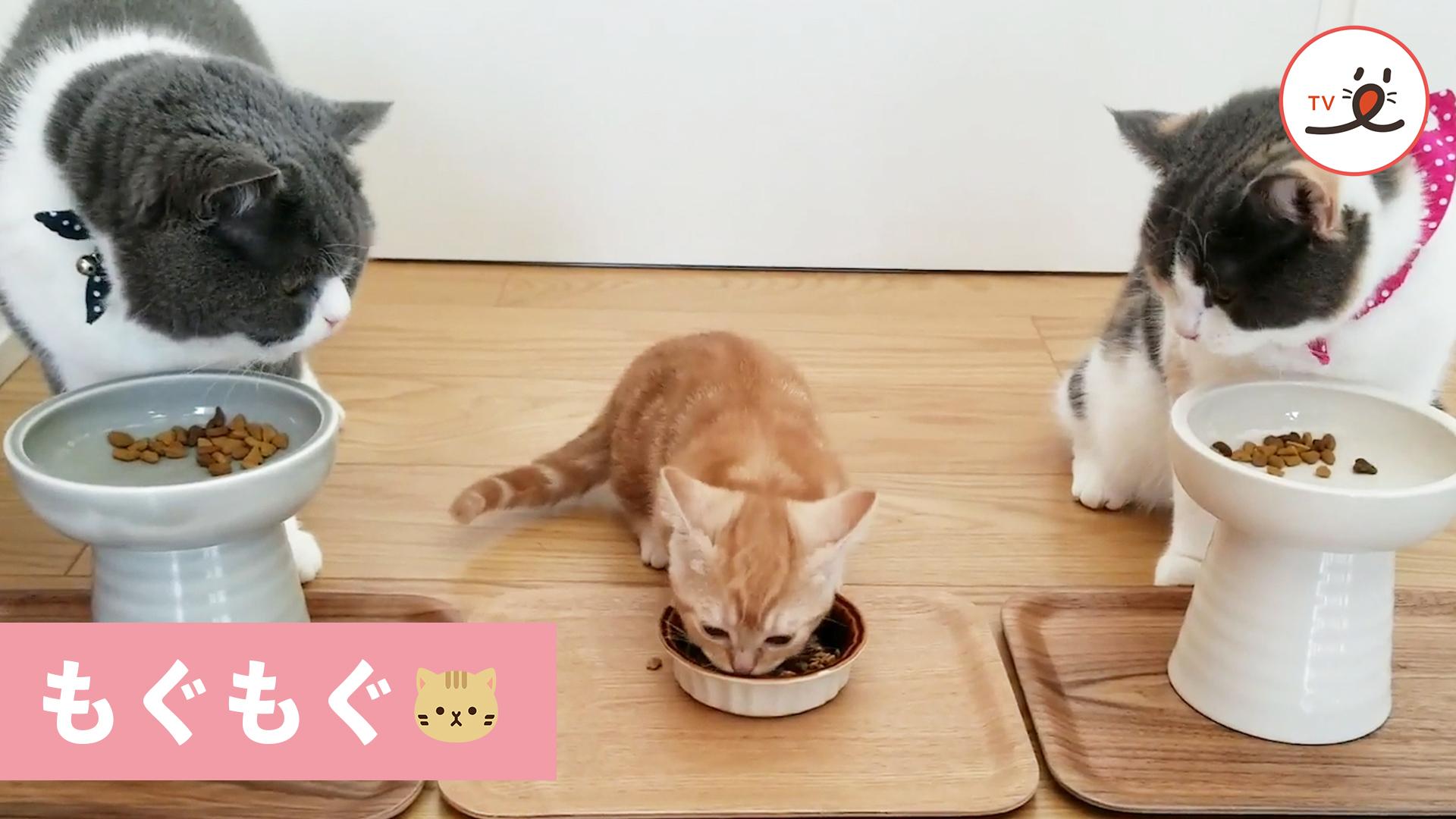 みんなで仲良くご飯中〜😋 2匹の先輩猫が後輩猫を見守る姿にほっこり😊