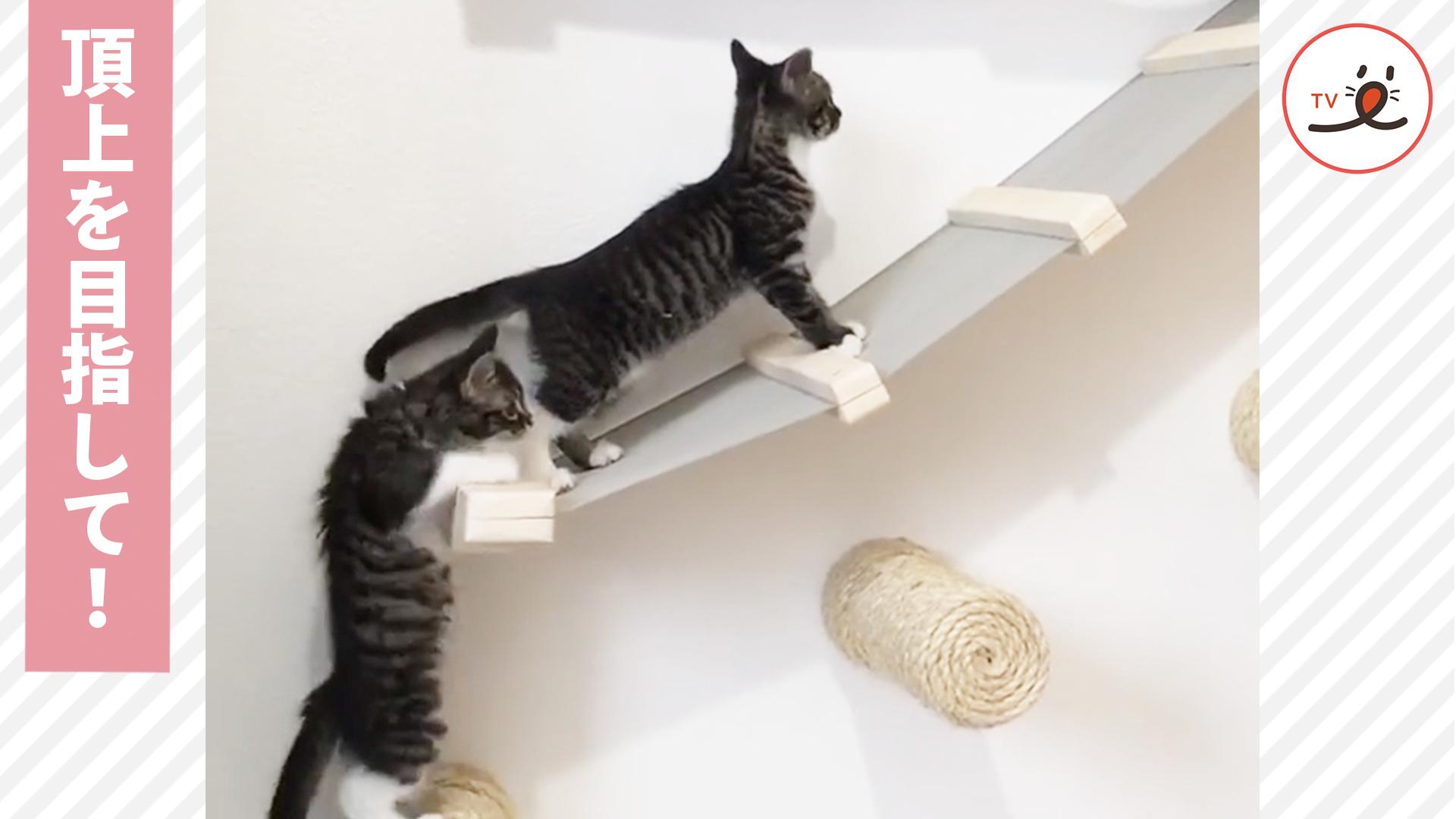 頂上を目指す猫さんの姿が可愛かった✨😍