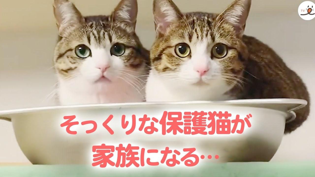 血の繋がりはないけれど…。優しく支え合う2匹の保護猫の物語♥