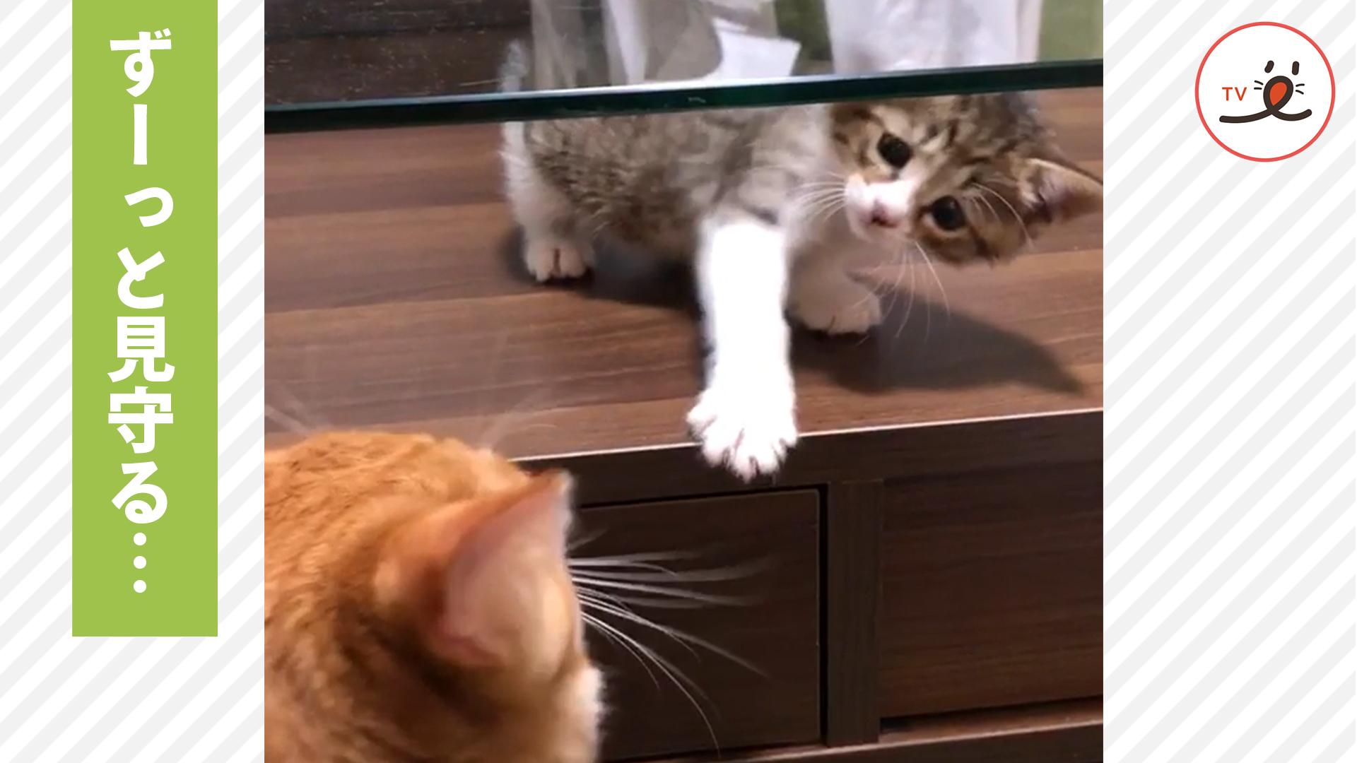 先輩猫たちが、遊ぶ子猫をジッと見守るが…😝😹