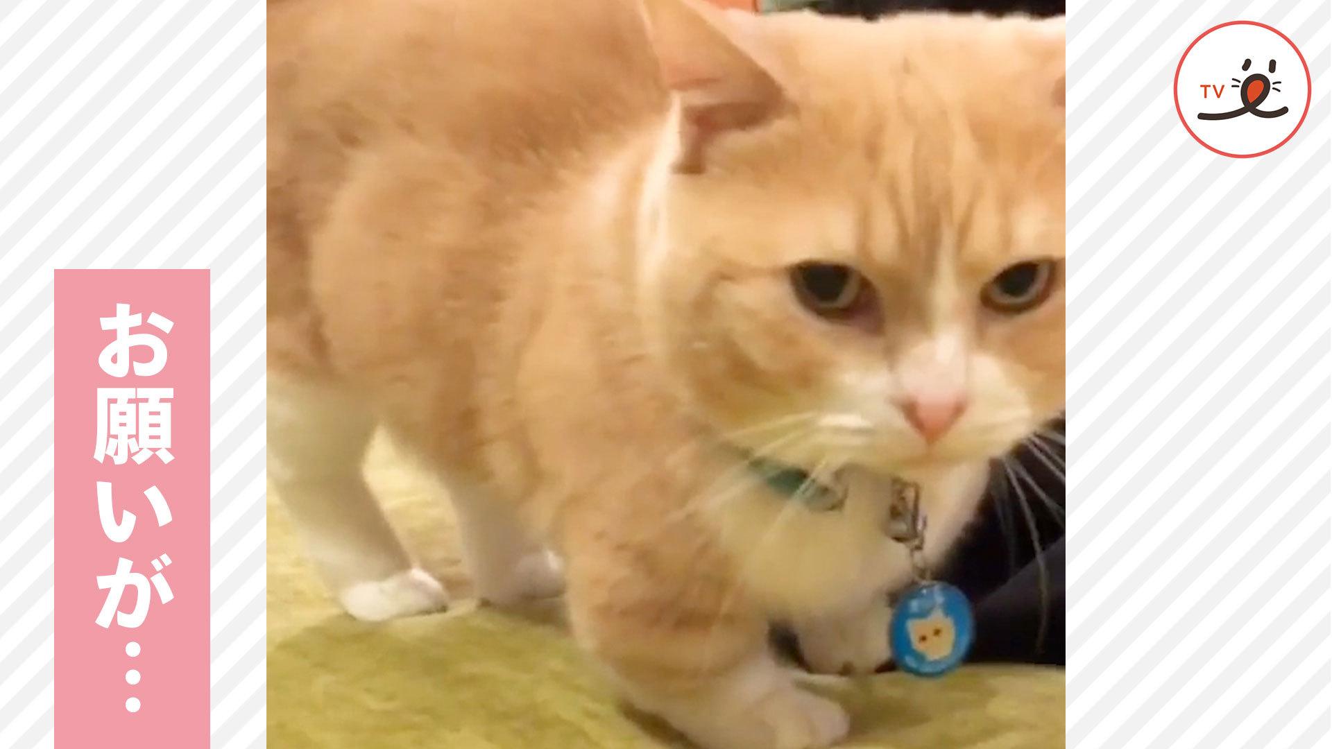 パパにスリスリ攻撃💓 何か言いたいことがありそうな猫さんだけど…🐱