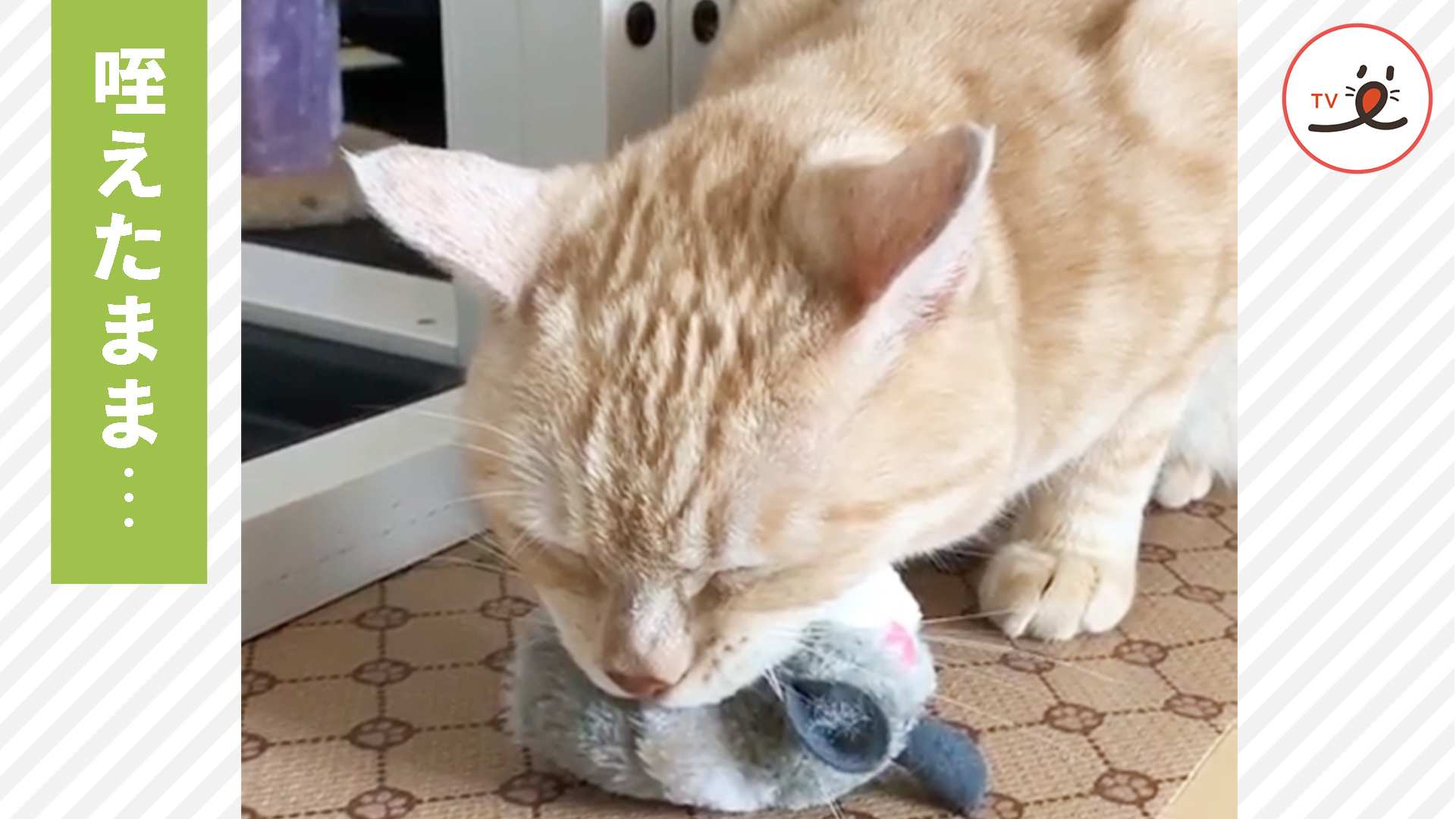 遊ぼうと思っておもちゃを咥えていたら、猫さんに「ある異変」が起きた…😂
