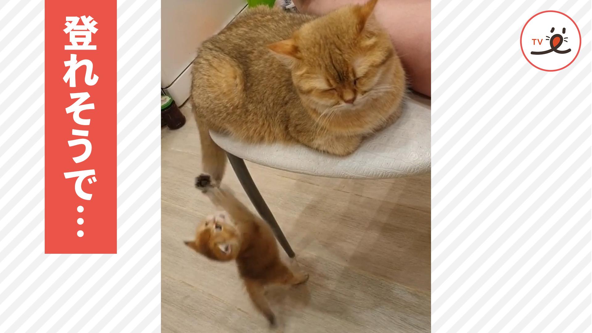 ママ猫の側に行きたくて、シッポに掴まって登ろうとする子猫😸❣️