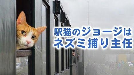 「ねずみ捕り主任」に正式任命された駅猫・ジョージくん! その業務の内容とは……?♡