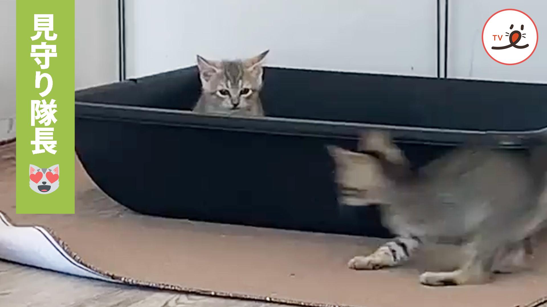 遊び盛りの子猫ちゃんたちを見守っているのは…💕😻