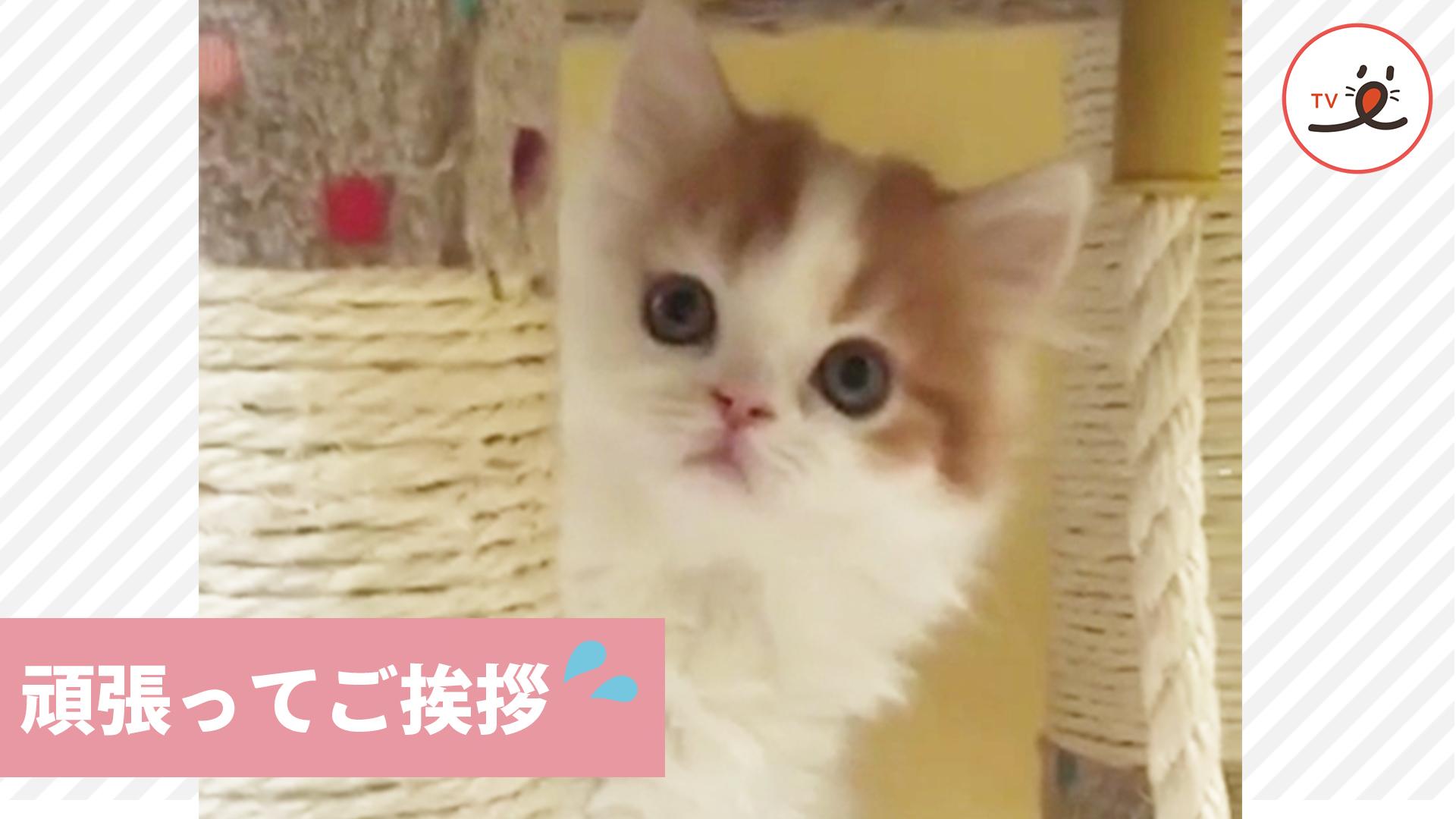 シャイな子猫ちゃんが勇気を出してご挨拶します♡