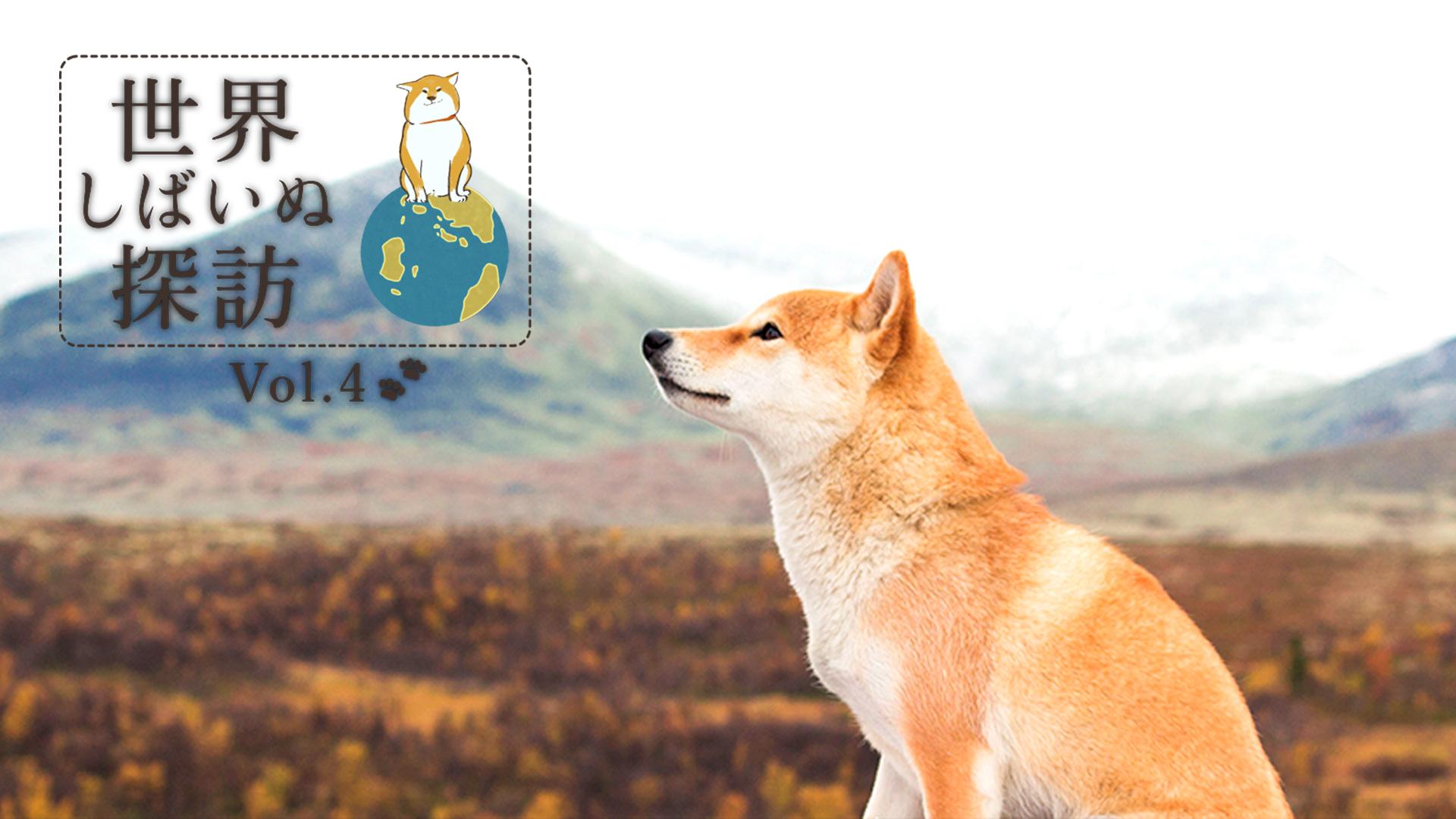 世界しばいぬ探訪 vol.4🐕🐾 ノルウェーに暮らす柴犬・Nanaの幸せな毎日✨