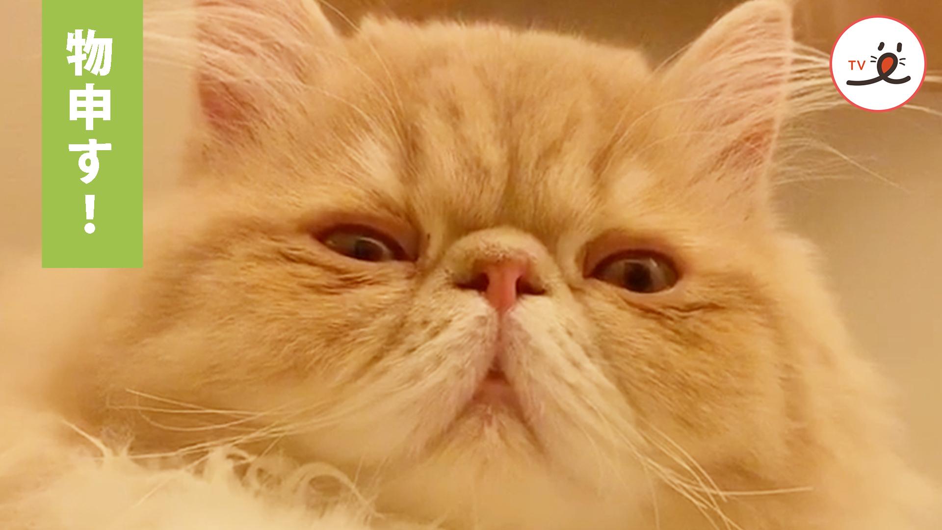 今日もお疲れ様😌 1日の終わりに猫様からのひと言🤣💕
