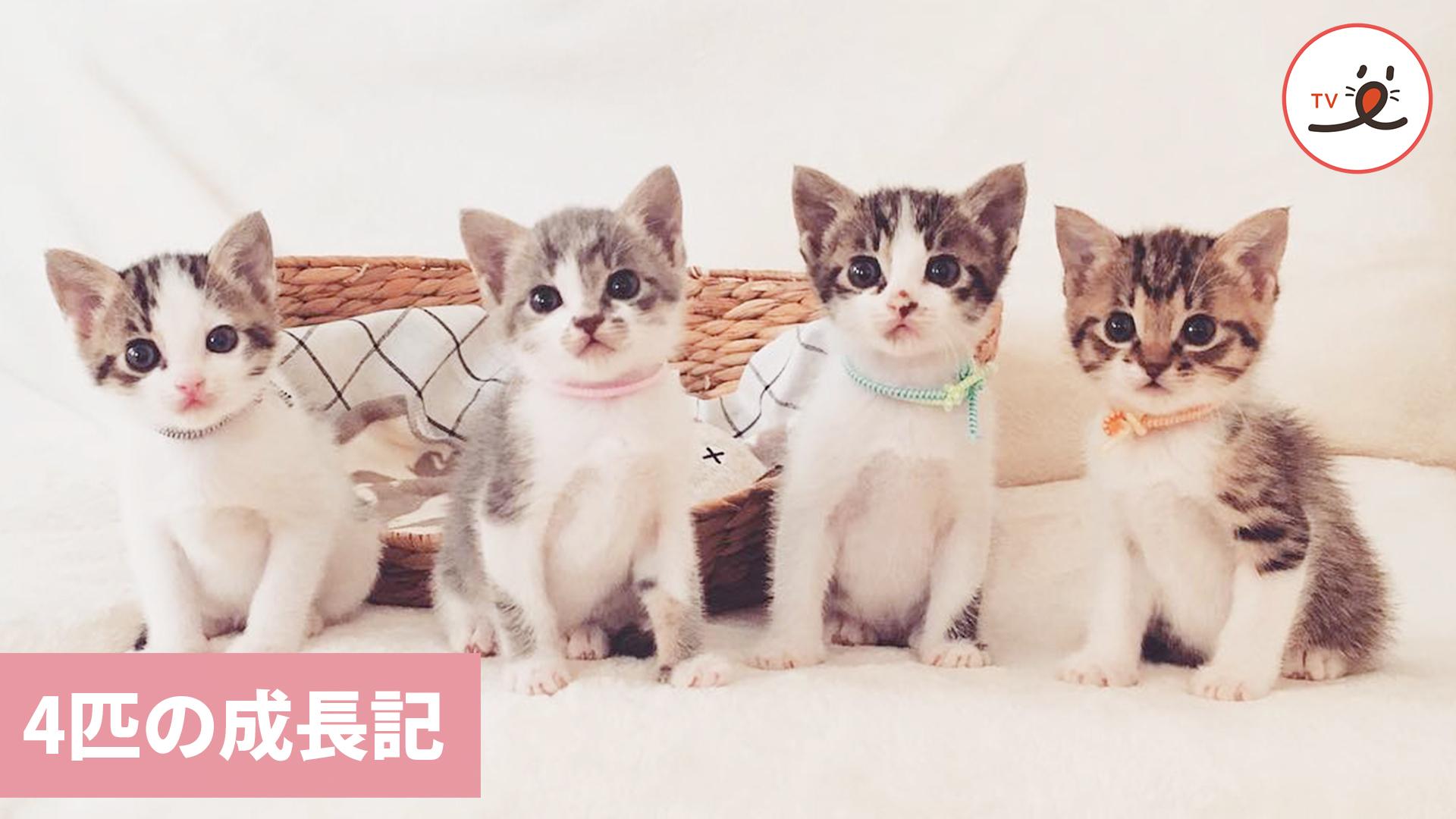 生後3日で保護された子猫ちゃんたちの、生き生きとした成長記⭐️