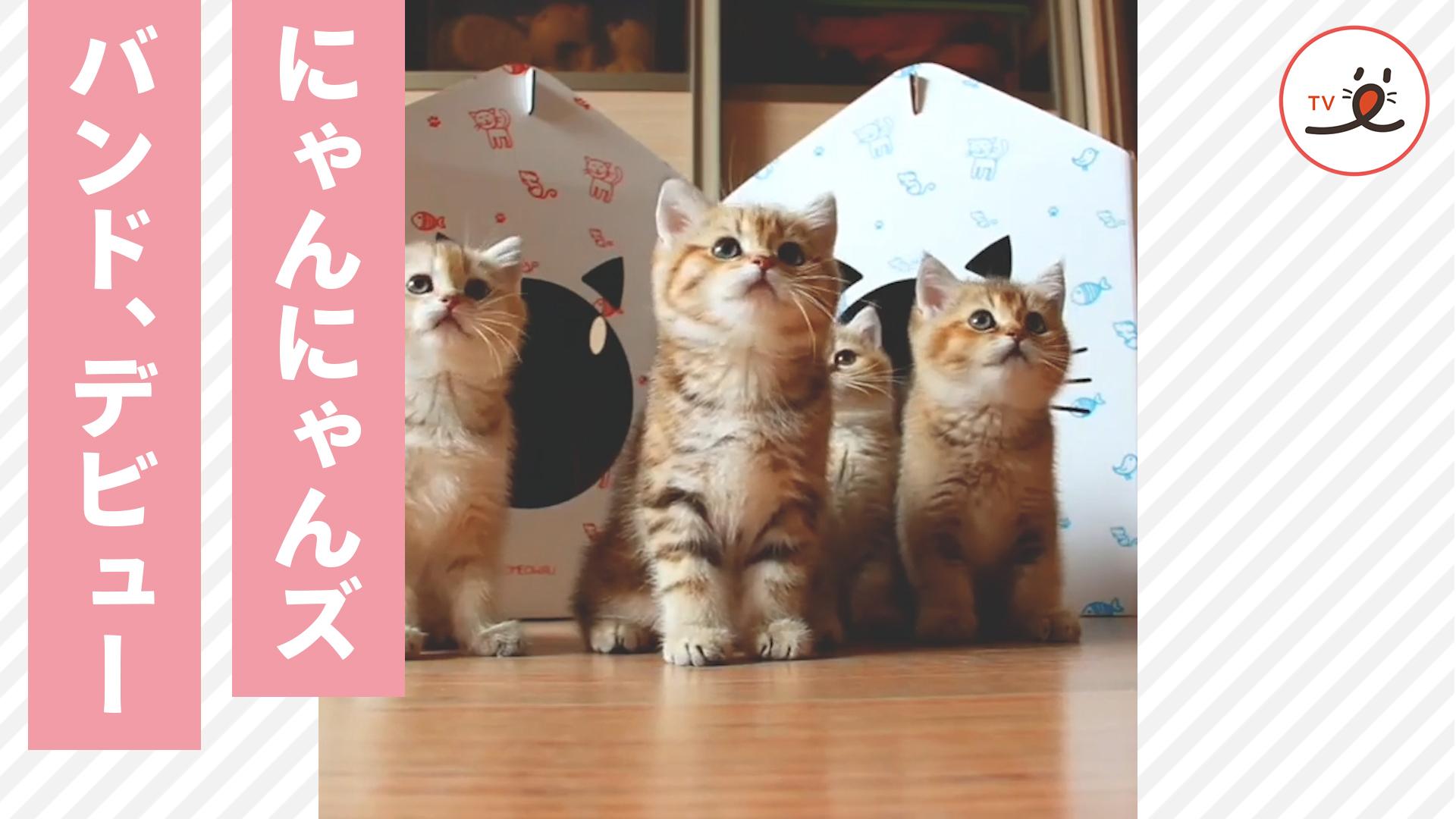 まるで子猫たちのバンド…❓ 可愛すぎるPVのお披露目です…💕