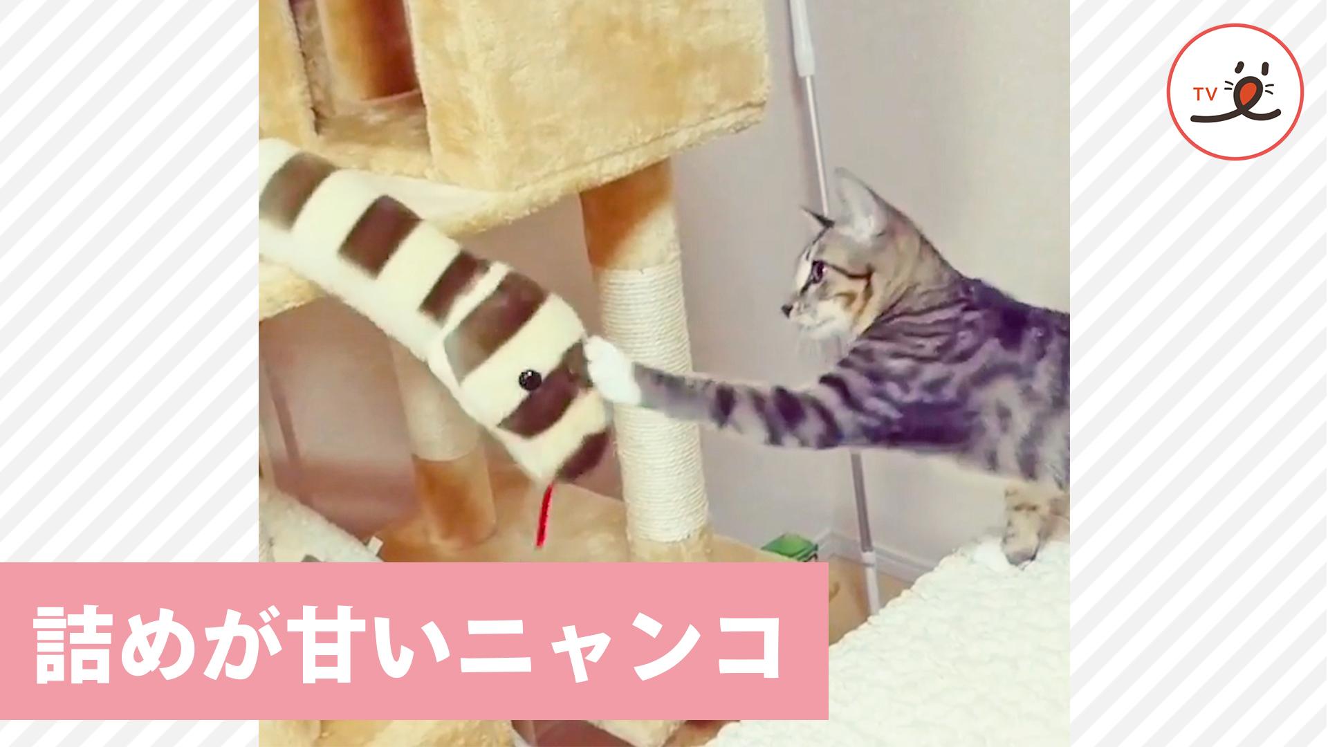 負けないにゃ~! ヘビのおもちゃにトドメの猫パンチをくり出すニャンコさん。 でも.....?