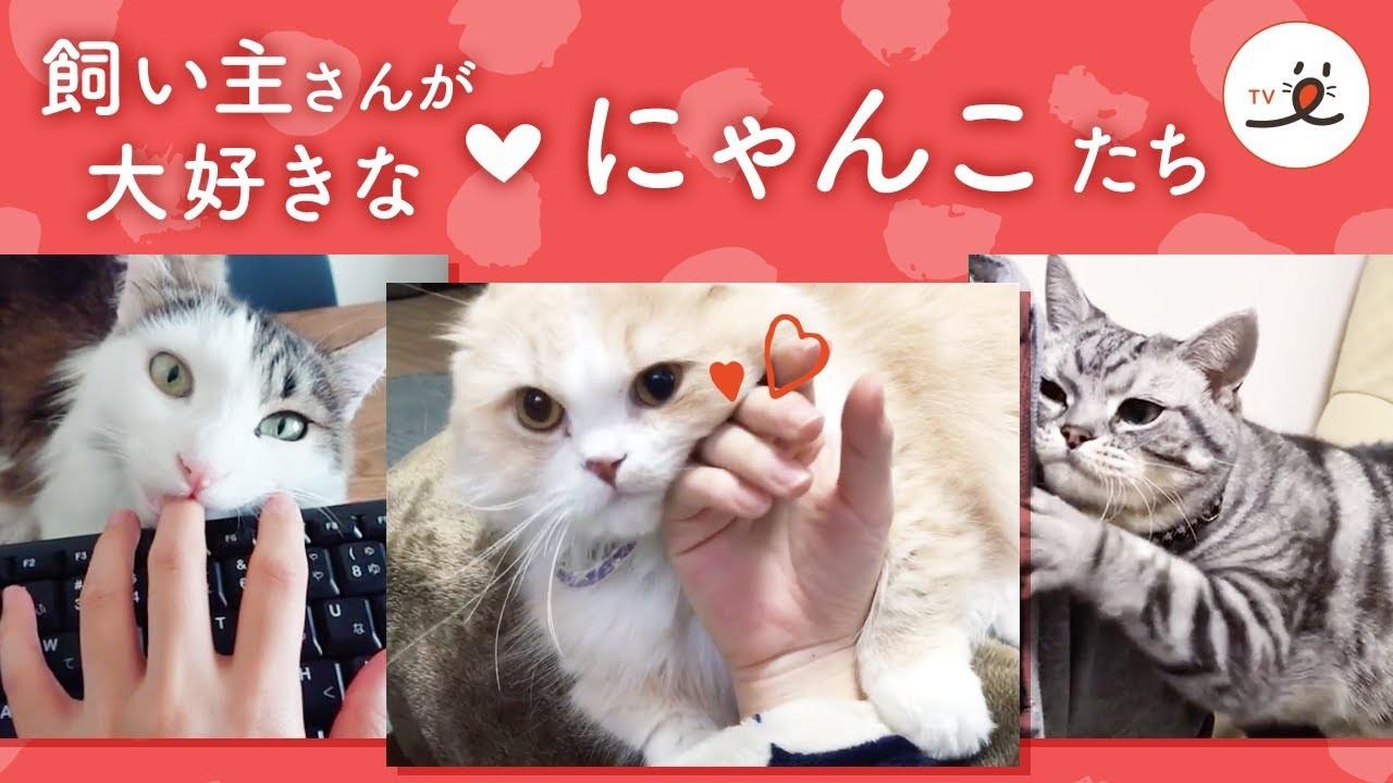 【猫の愛が止まらない】飼い主さんが大好きな猫たちの、甘々すぎる5分間!