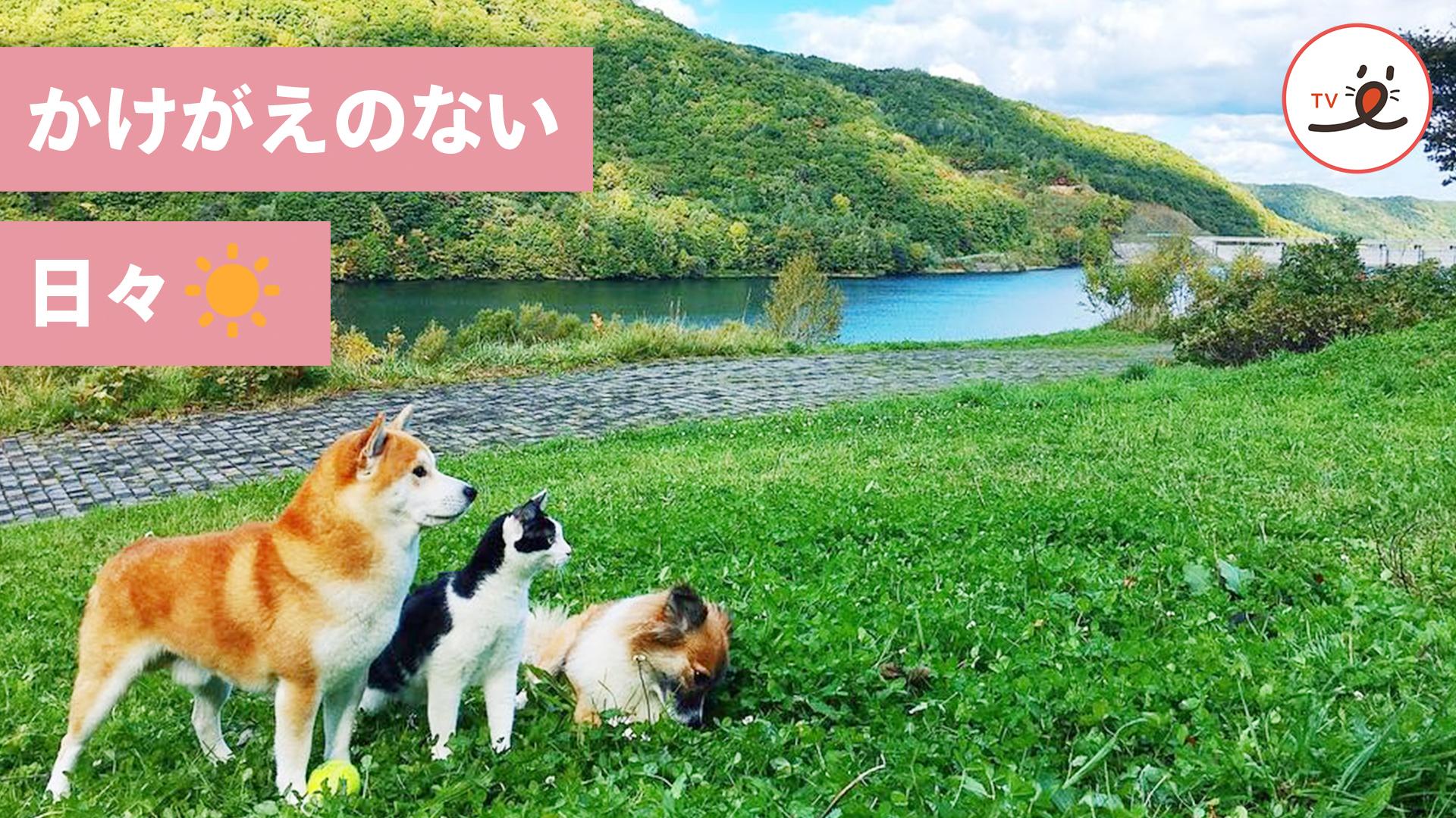 保護猫が2匹の犬に育てられた、心温まる優しい物語🌻