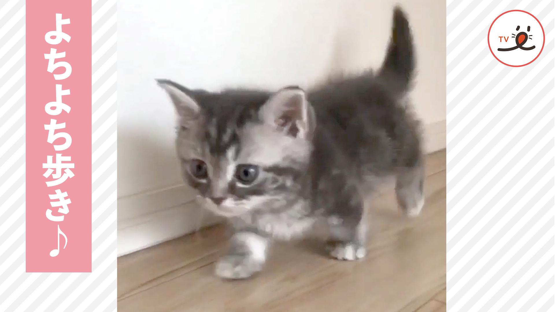 一生懸命歩いたから褒めてニャ! 😸 愛くるしい子猫達のよちよち歩き💕