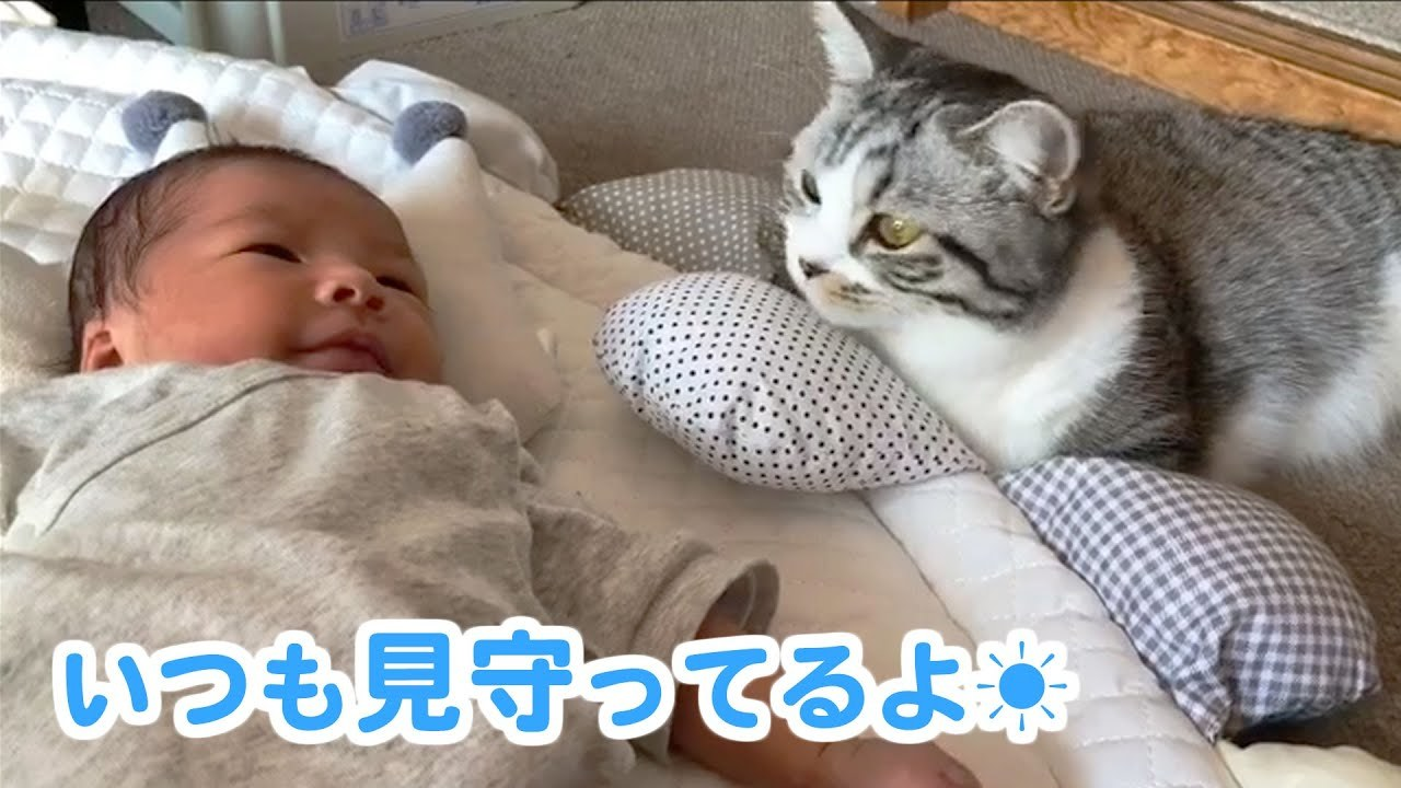赤ちゃんと姉ニャンコの間に生まれた、優しい絆のかたちは…♡