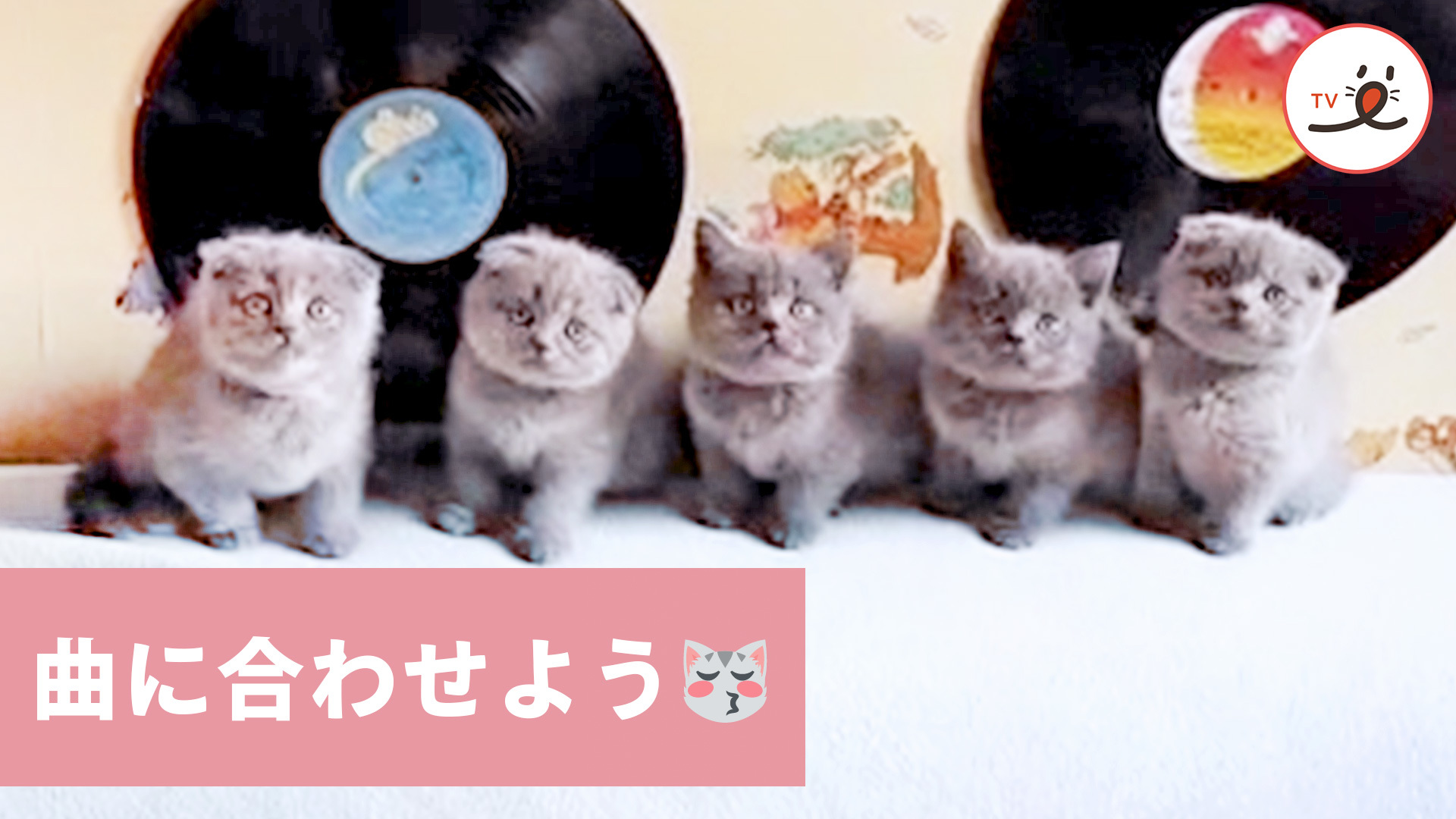 みんな揃ってワンツー♪ 子猫ちゃんたちのリズム教室😽
