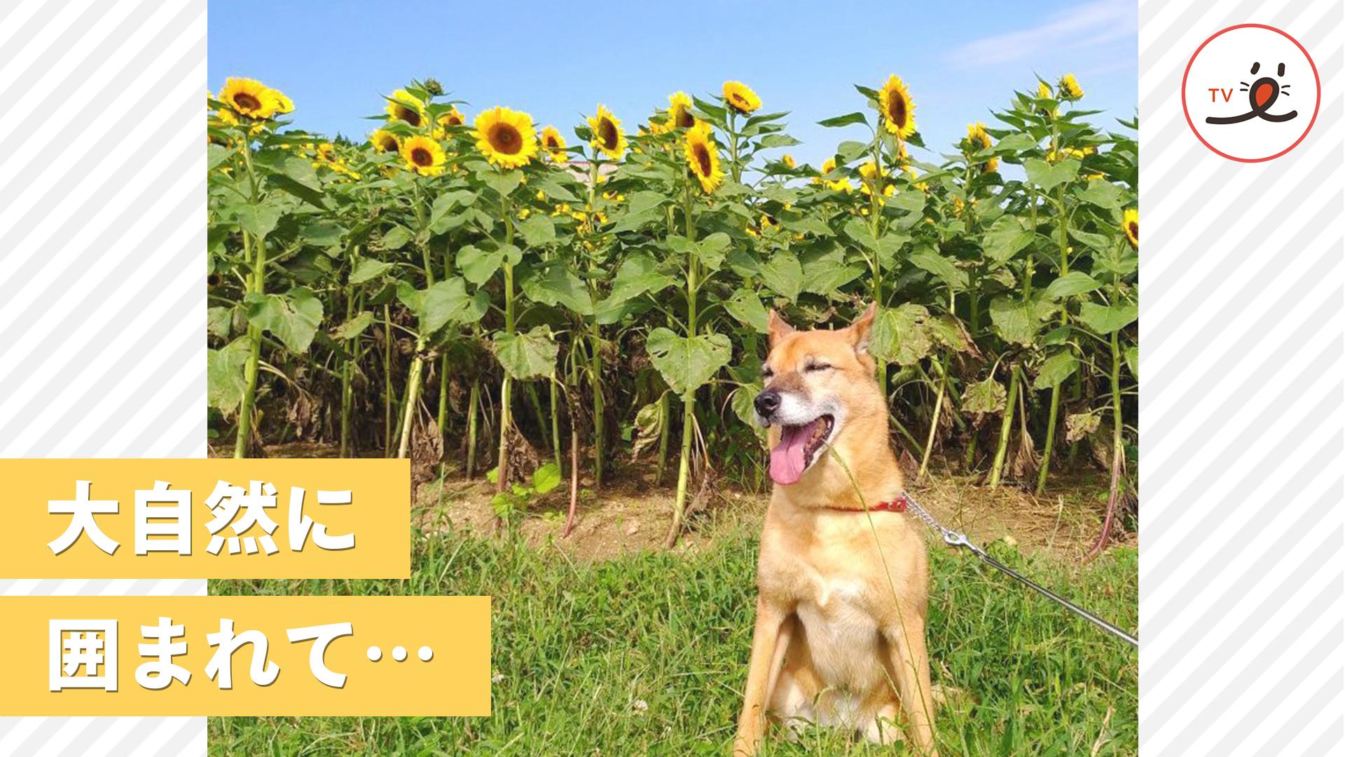 美しい四季の風景を駆け抜ける、元保護犬の物語……。