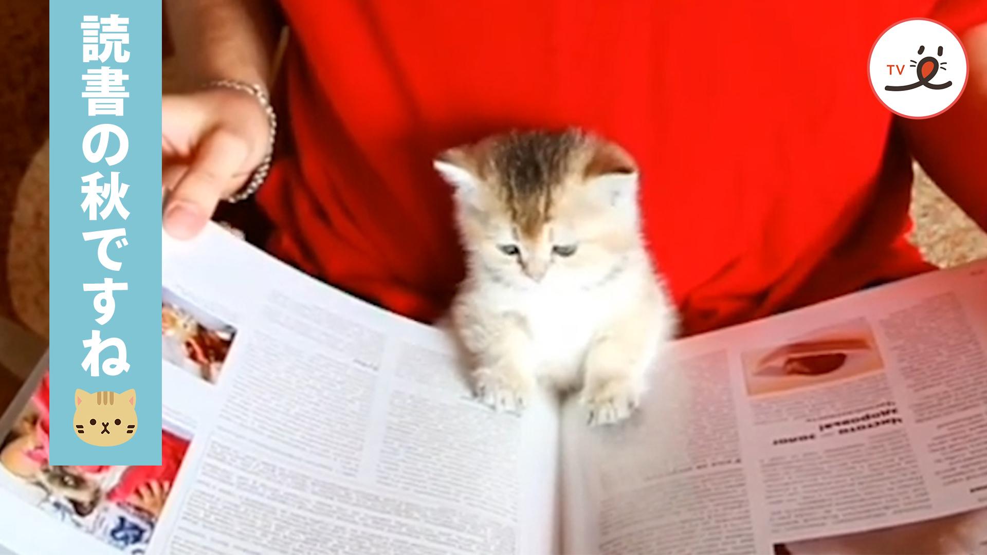 「読書の秋🍁 」人間になるため!? 読書に夢中の子ネコ😾💕
