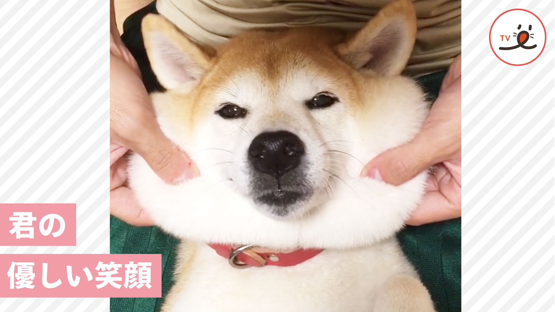 元保護犬おさめちゃんが笑顔を取り戻すための物語♡