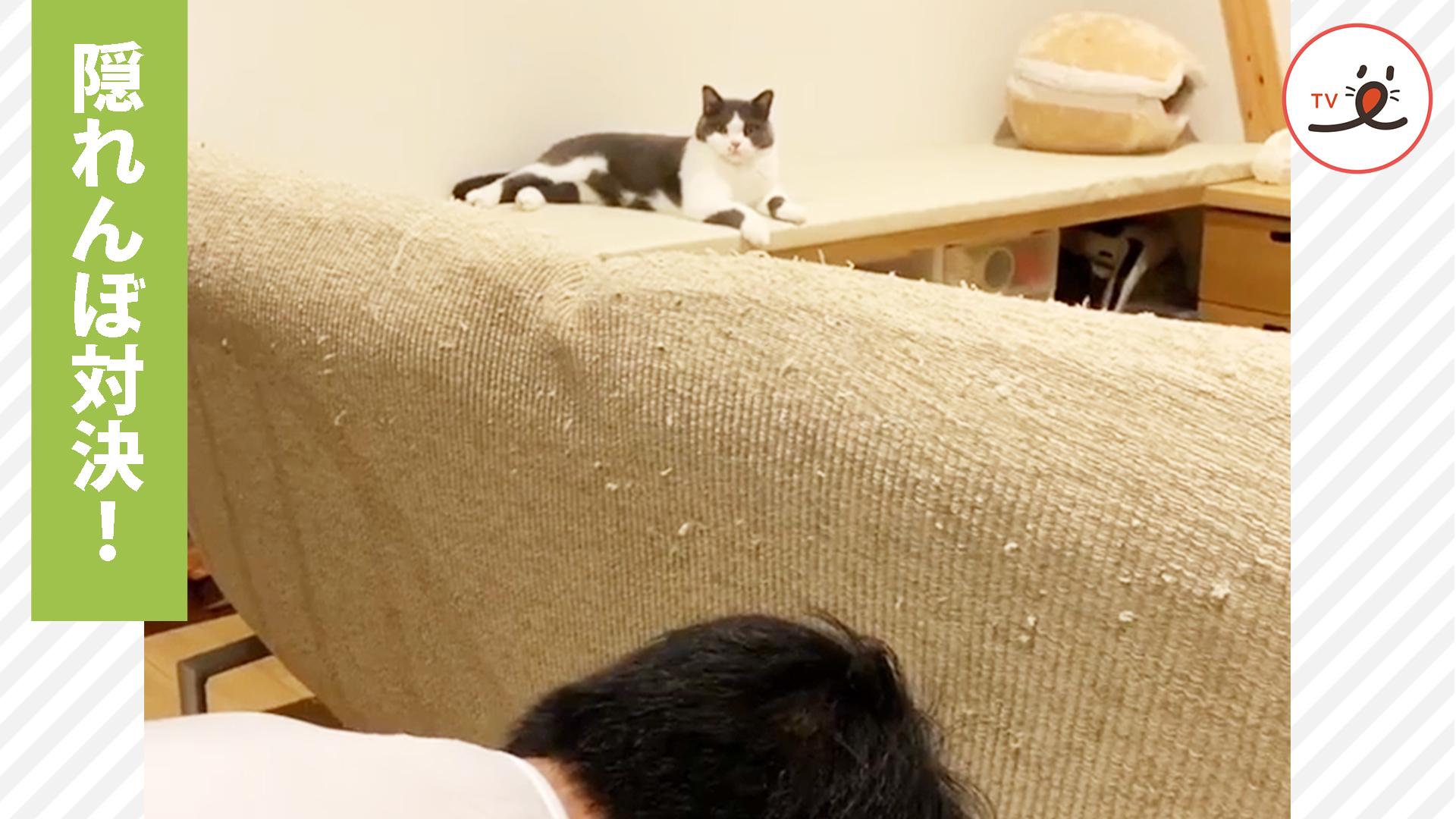 隠れんぼがめっぽう強い猫さん✨ パパとの二本勝負🤣