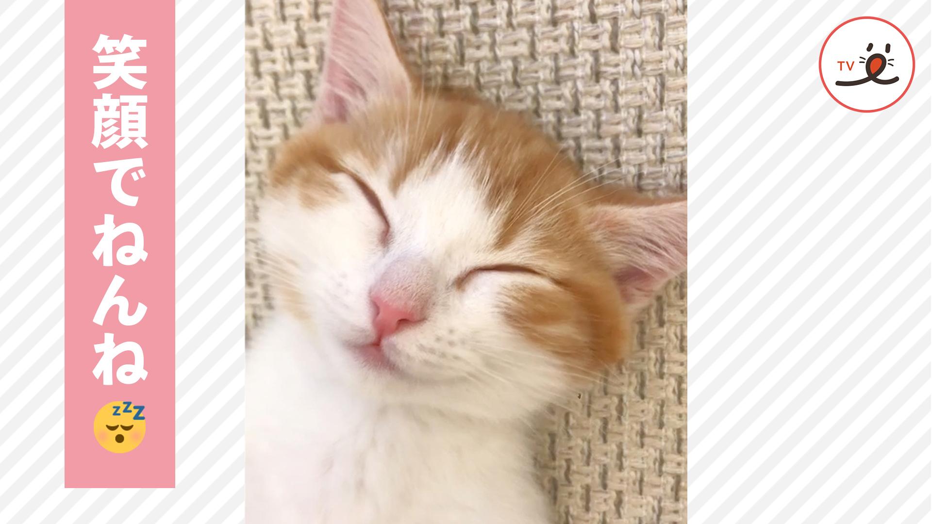 どうしてこの寝方に😂❤️ 超リラックスして眠る子ネコの姿が可愛すぎる😻